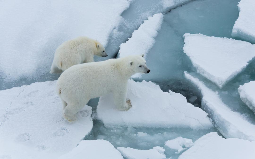 Dal plancton agli orsi polari, le preoccupazioni del Cnr per la salute degli oceani
