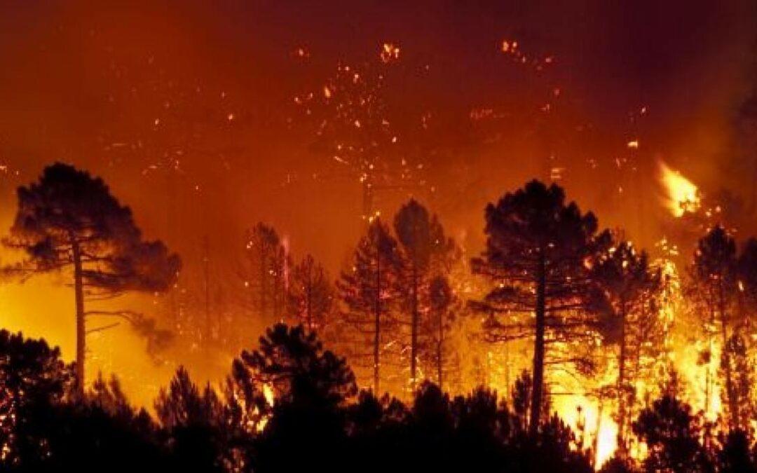 Dagli incendi ai fondali marini: le sostanze che inquinano il Mediterraneo