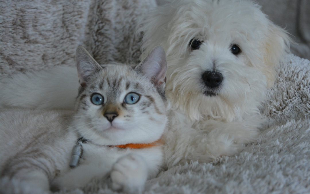 Salute: COVID-19, facile il passaggio del virus dai proprietari ai cani e gatti di casa