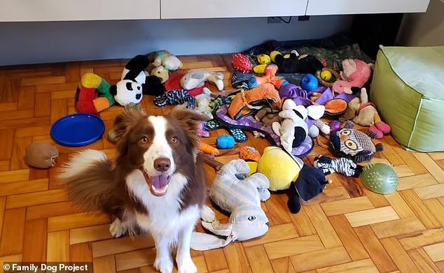 I cani 'genio' imparano i nomi dei giocattoli, Border Collie in testa
