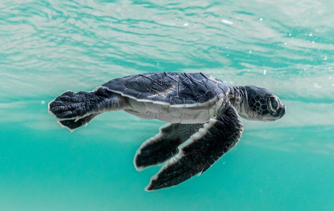 Ricerca scientifica, la Stazione Zoologica Anton Dohrn nella top 10 della biologia marina mondiale
