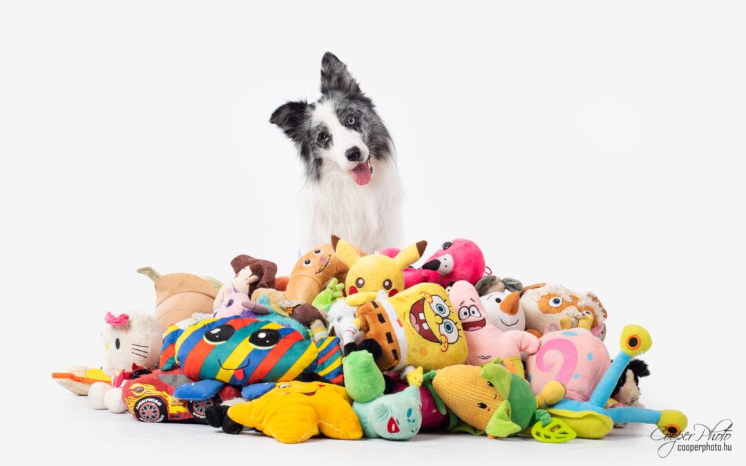 Scienza: alcuni cani imparano fino a 12 nomi di oggetti